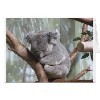 Koalabär Karte
