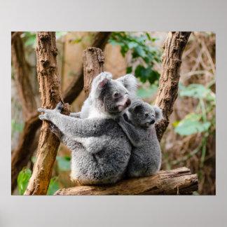 Koalabär Poster