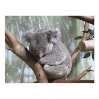 Koalabär Postkarte