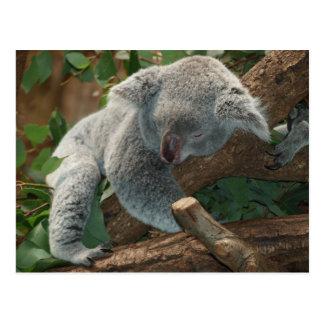 Koalabär so niedlich postkarte