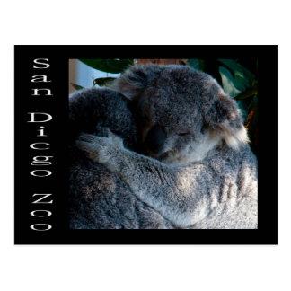 Koalabären Postkarte