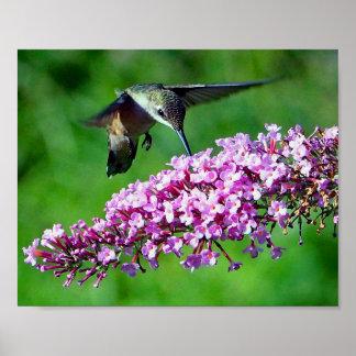 Kolibri 4 poster