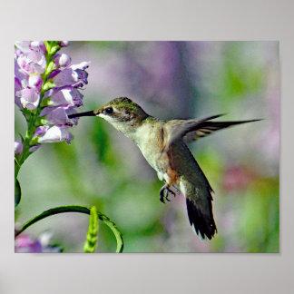 Kolibri 733 poster