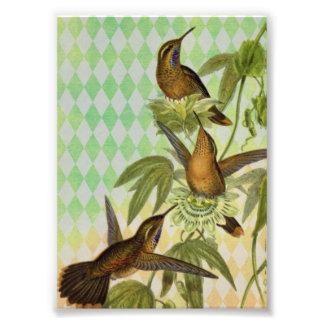 Kolibri-Digital-Kunst Photo Drucke