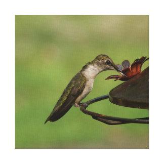 Kolibri, eingewickelter Leinwand-Druck Leinwanddruck