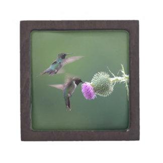 Kolibri Schachtel