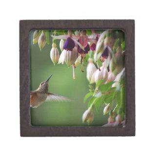 Kolibri und Fushia Pflanze Schachtel