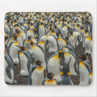 König-Pinguinkolonie, Falkland Mousepads