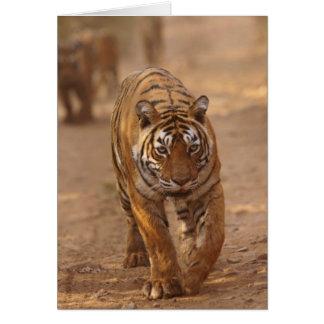 Königliche bengalische Tiger auf der Bahn, Grußkarte