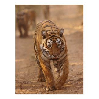 Königliche bengalische Tiger auf der Bahn, Postkarten