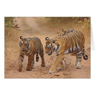 Königliche bengalische Tiger in Bewegung, Karte