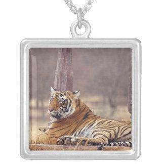 Königlicher bengalischer Tiger am ceaph, Versilberte Kette