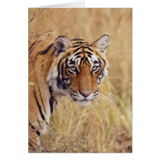 Königlicher bengalischer Tiger, der von aufpasst Grußkarte