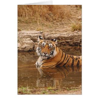 Königlicher bengalischer Tiger im Dschungelteich, Karte