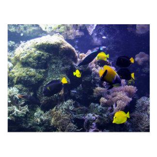 Koralle-Riff Foto-Postkarte Postkarte