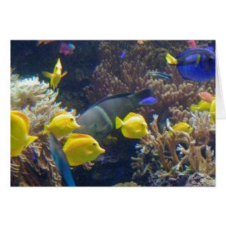 Korallenriff-Fische Karte