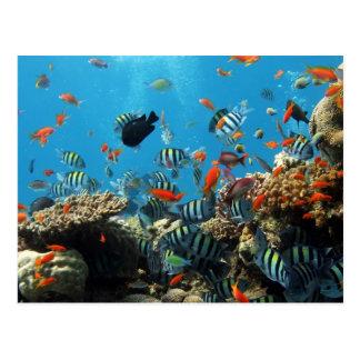 Korallenriff-Fische Naturescape Postkarte