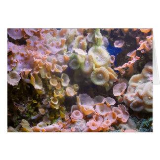 Korallenriff-Kunst-Karte Floridas Karte