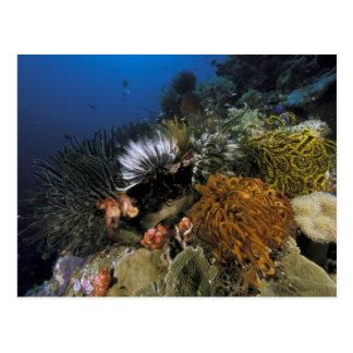Korallenriff Postkarte
