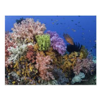 Korallenriff, uderwater Ansicht Postkarte