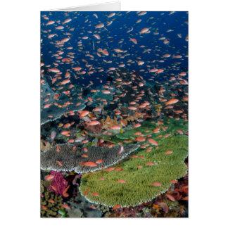 Korallenriff-und Fisch-Schulen Karte