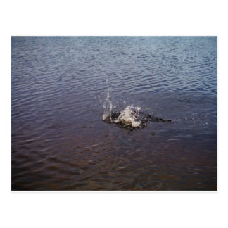 Kräuselungen in einem See, von einem Fischspringen Postkarte