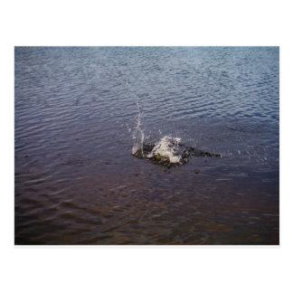 Kräuselungen in einem See, von einem Fischspringen Postkarten