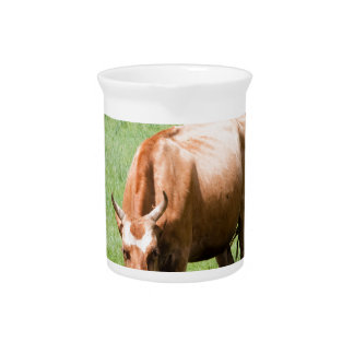 Kühe und Stiere Getränke Pitcher
