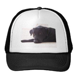 labrador retriever caps