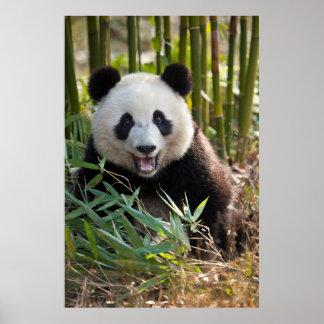 Lächelndes Panda-Porträt Poster
