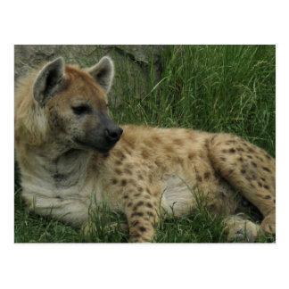 Lachende Hyänen-Postkarte Postkarte