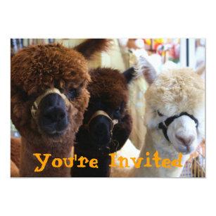 Lama Lama Einladung Einladung