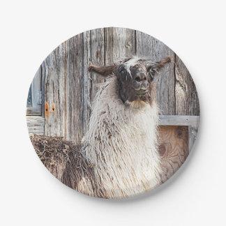 Lama vor einer Scheune Pappteller