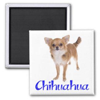 Langes Haar-Chihuahua-Hündchen Quadratischer Magnet