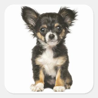 Langes Haar-Chihuahua-Hündchen - schwarzes Quadratischer Aufkleber