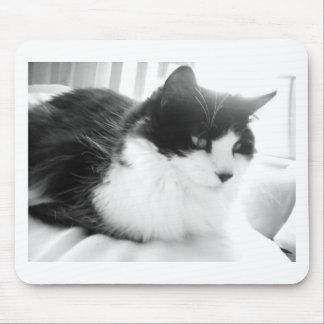 Langhaarige Miezekatze-Schwarzweiss-Katze Mousepad