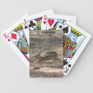 Laufendes Grundeichhörnchen Pokerkarten