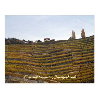 Lavaux Terrassen Postkarte