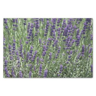 Lavendel-Blumen mit Blumen Seidenpapier