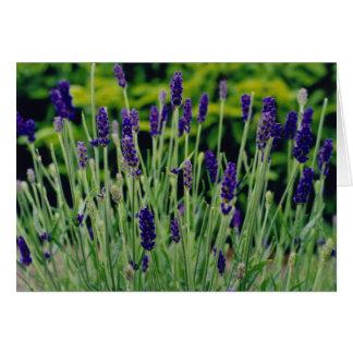 Lavendel in Dublin, Irland Karte