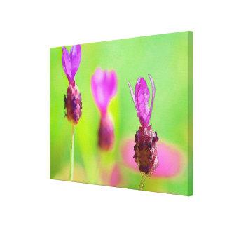 Lavendel-Knospen-malende Prämie eingewickelte Leinwanddruck