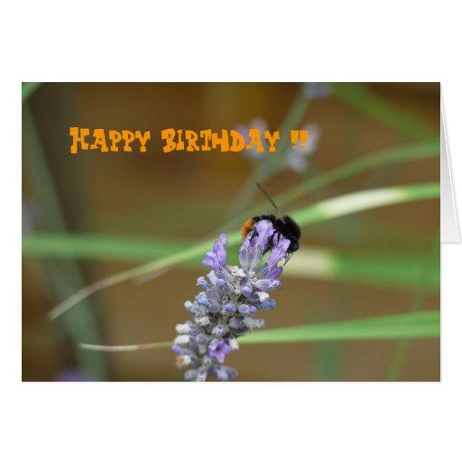 Lavendel mit Hummel Geburtstagskarte Karten