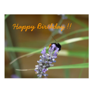 Lavendel mit Hummel Geburtstagskarte Postkarte