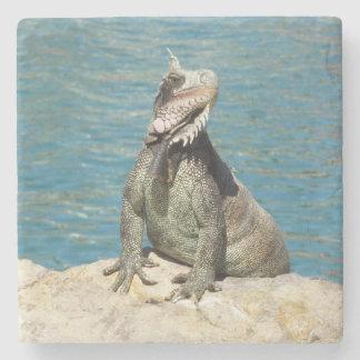 Leguan-tropische wild lebende Tiere Steinuntersetzer