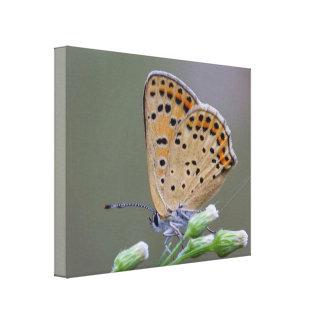 Leinwand-Druck-Schmetterling - Mutter Leinwanddruck