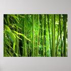 Leinwanddruck Leinwand  Canvas Print   Bambus Poster