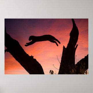 Leopard, der am Sonnenuntergang springt Poster