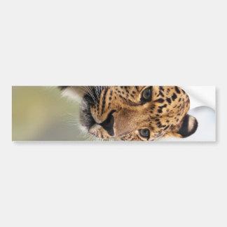 Leopard-Foto Autoaufkleber