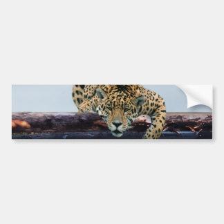 Leopard im Baum 1 Autoaufkleber