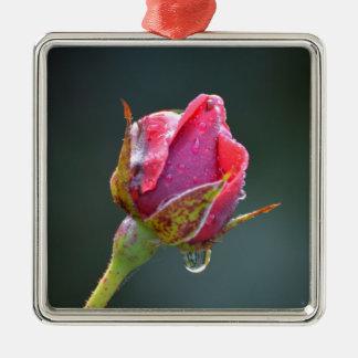 letzte rote Rose im Herbst mit Wassertropfen Silbernes Ornament